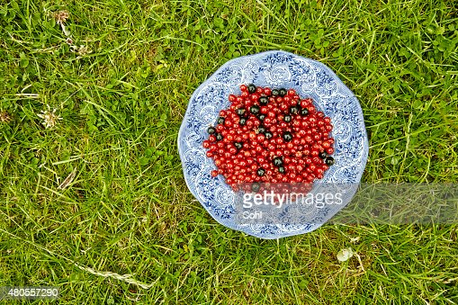 Berrys in the Garden : Stock Photo