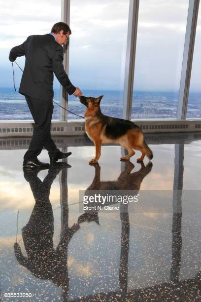 Best In Show winner at the 2017 Westminster Kennel Club Dog Show 'Rumor' a 5 year old German Shepherd poses for photographs with his handler Kent...