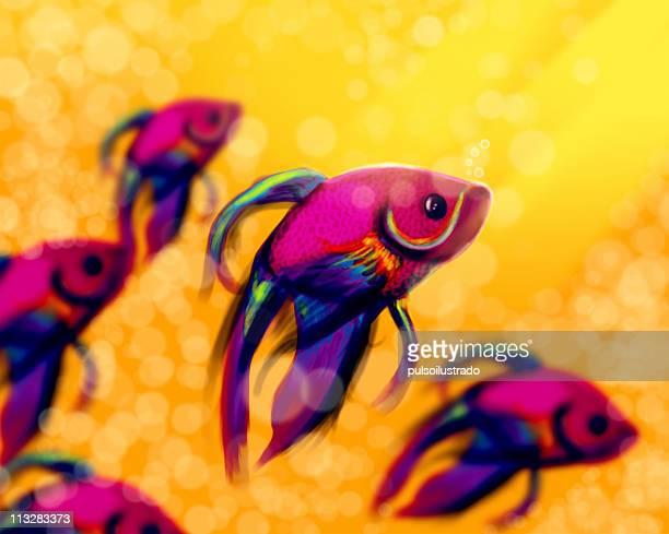 poisson exotique d 39 eau douce photos et images de collection getty images. Black Bedroom Furniture Sets. Home Design Ideas