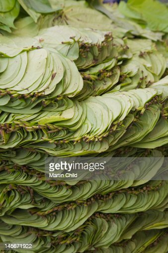 betel leaves for sale : Stock Photo