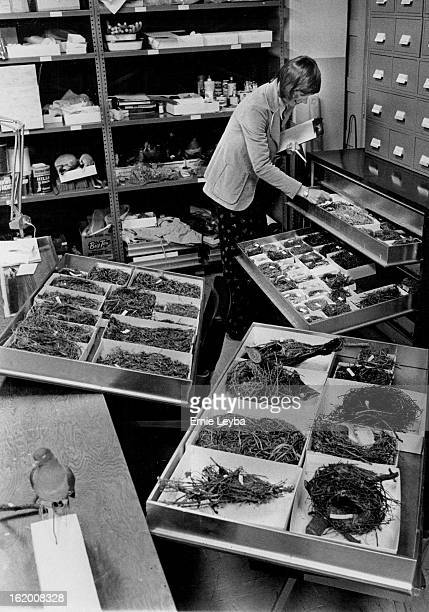 MAR 17 1975 MAR 19 1975 MAR 30 1975 Betsy Webb curator of zoological and special collections checks drawer in the bird nest study collection at...