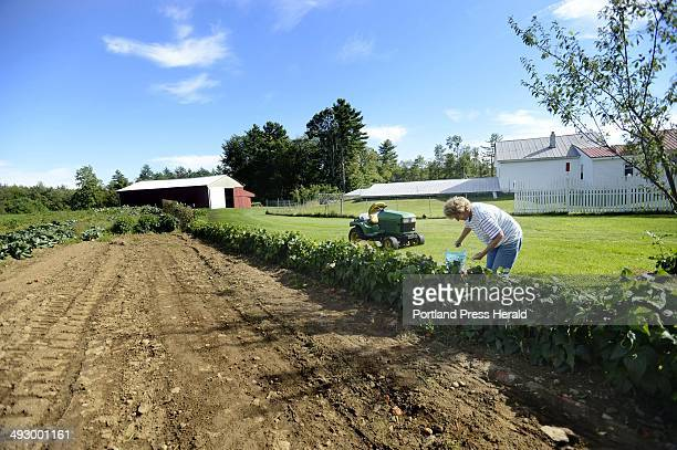 Betty Page of Upper Guinea Rd in Lebanon picks green beans in the garden on her family's 16 acres farm Tuesday September 11 2012 Betty and David Page...