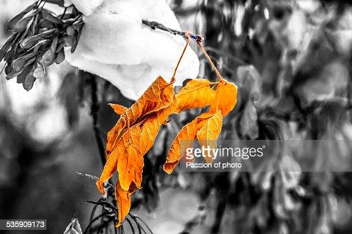 Between autumn and winter : Foto de stock