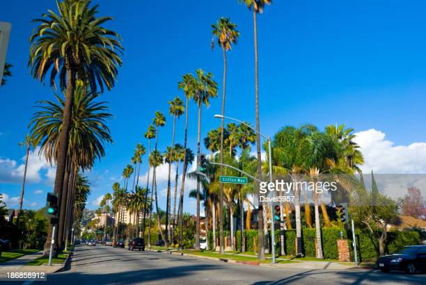 Beverly Hills Neighborhood palm tree lined street