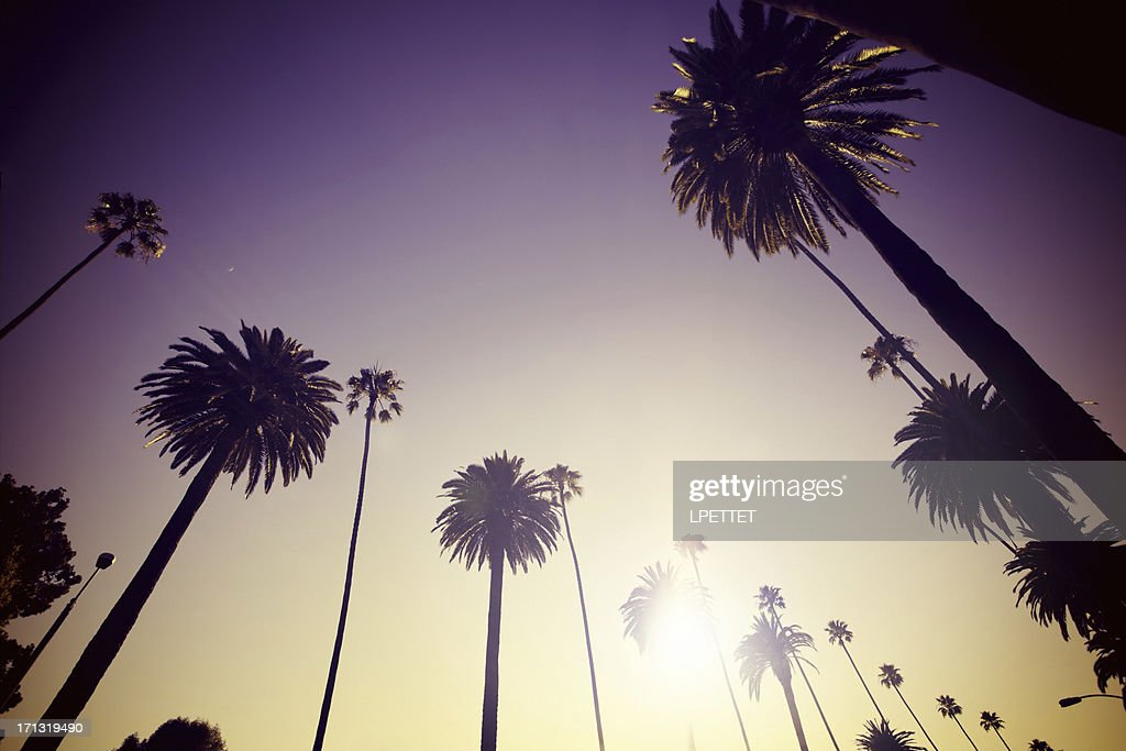 Beverly Hills Palm Trees