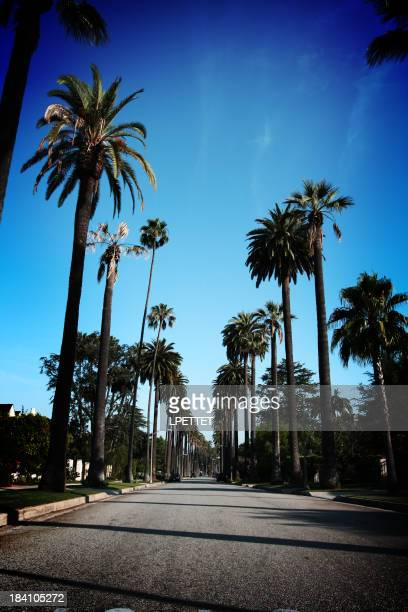 Beverly Hills palm trees with blue skys