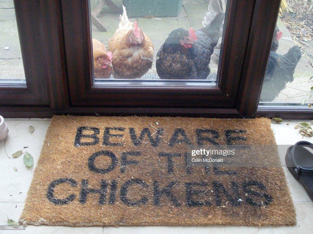 Beware of chickens