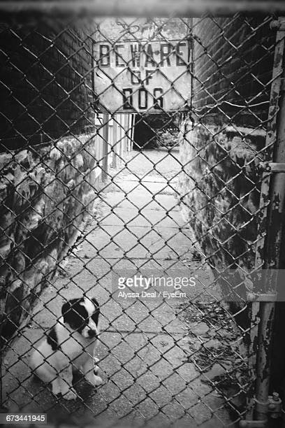 Beware Of Dog Sign Chainlink Fence Gate With Puppy Sitting On Footpath