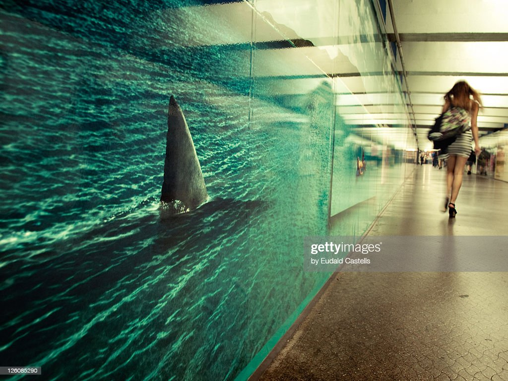 Beware of hungry sharks : Stock Photo
