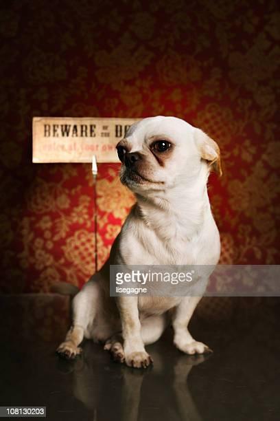 Beware dieser Hund