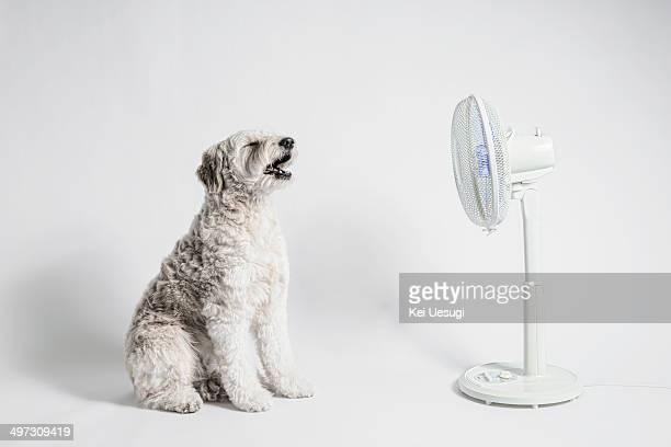 Bianca loves  the fan.
