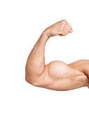 biceps isolated on white background