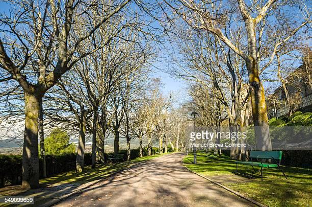 Bicil lane in the park