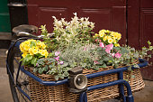 Old fashion Bike with basket of colouful flowers displayed