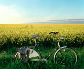 Bicycle by rape field