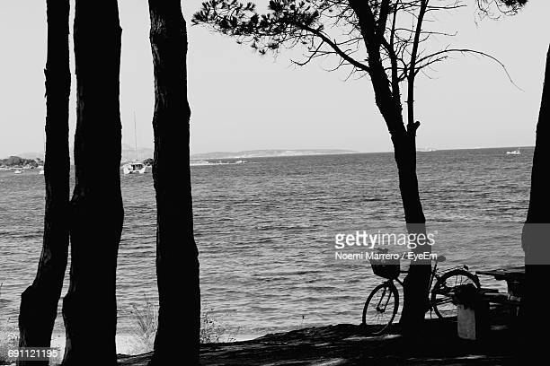 Bicycle By Tree On Shore Against Sky