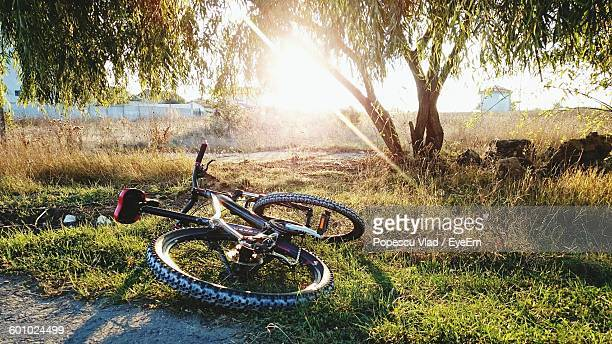 Bicycle Fallen On Grassy Field