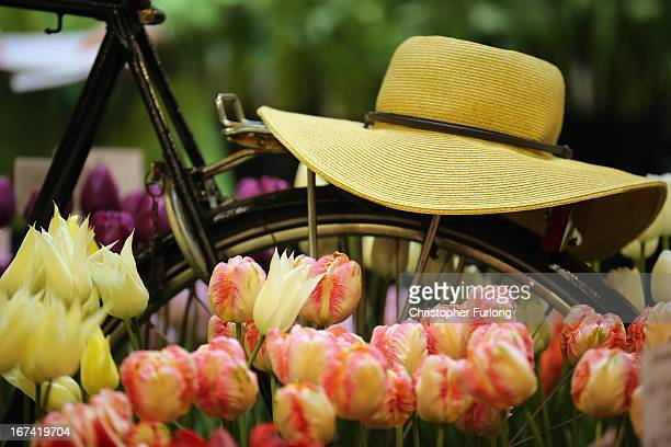 A bicycle makes up part of a display of Dutch tulips at the Harrogate Spring Flower Show on April 25 2013 in Harrogate England Over 100 nurseries are...
