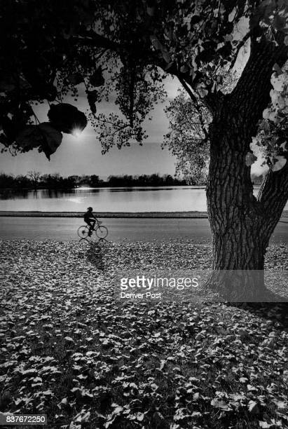 Bicyclist Finds A Clear Path A carpet of leaves blankets the foreground as a bicycle rider pedals along a road in Washington afternoon during an...