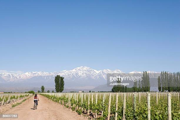 Bicyclist in vineyard