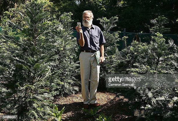 A bidder inspects a Wollemi Pine lot during the Sotheby's Wollemi Pine auction of 292 first generation collectors edition trees at the Sydney Royal...