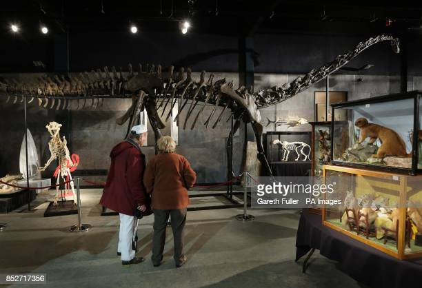 Bidders admire the 17 metre long specimen of a longnecked Diplodocus Longus which will be auctioned at Summers Place Auctions in West Sussex...