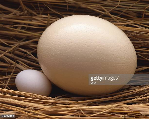 Big and Small Egg in Straw, High Angle View, Close Up