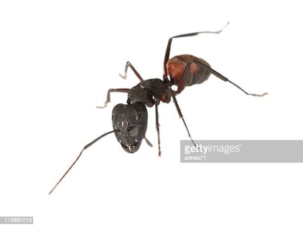 Big ant 05