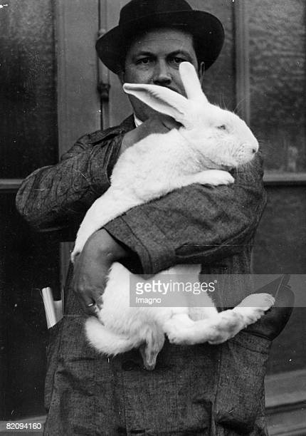 A big arctic hare on the arm of its owner Photograph Around 1935 [Ein grosser Schneehase auf dem Arm seines Besitzers Photographie Um 1935]