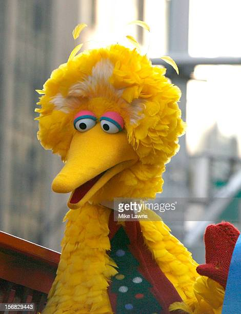 Big Bird of Sesame Street attends the 86th Annual Macy's Thanksgiving Day Parade on November 22 2012 in New York City