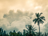 Big clouds forming in sky. Tropical rain forest and top of the trees in foreground.