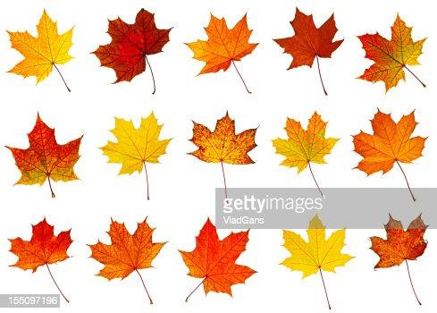 big collection of autumnal leaf