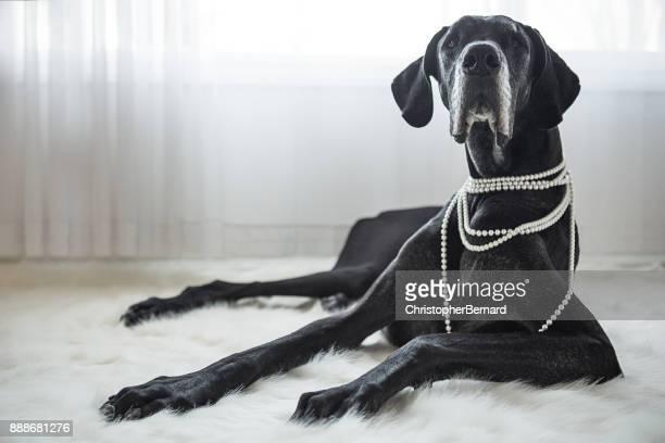 Großer Hund Handauflegen Pelz-Wolldecke