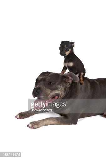 Big dog Little puppy best friends