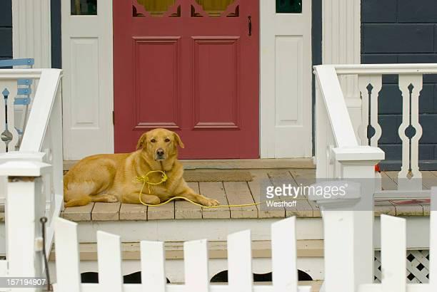大きな犬用のポーチ
