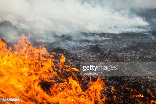 Big fire in the field. : Stock Photo