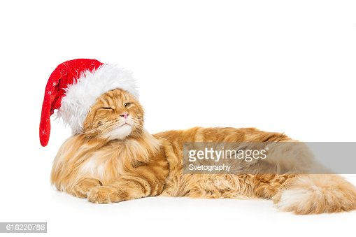 Big ginger cat in christmas hat : Stock Photo