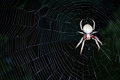 a big hairy spider in the middle of its web