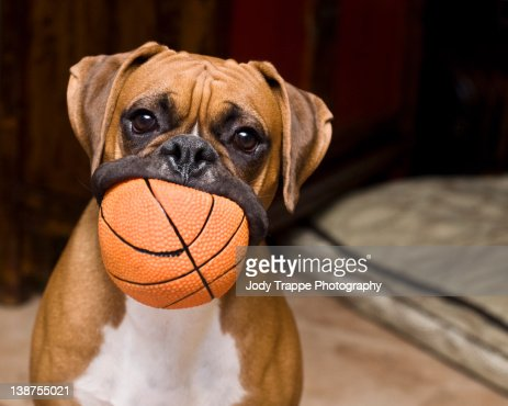 Big mouth of dog