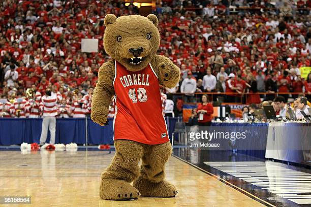 Big Red Bear the mascot of the Cornell Big Red performs against the Kentucky Wildcats during the east regional semifinal of the 2010 NCAA men's...