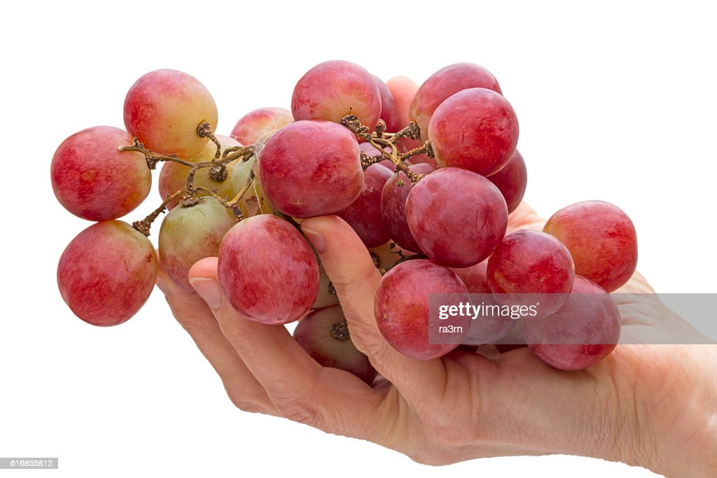 Big red grapes in hand : Stock Photo