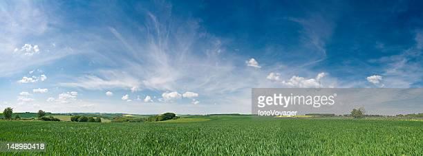 Big skies over lush green crop