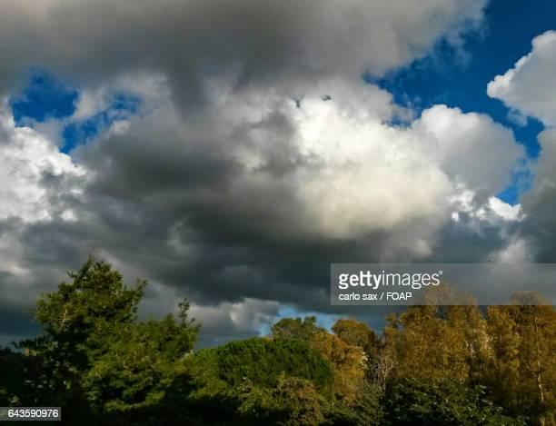 Big storm cloud over tree