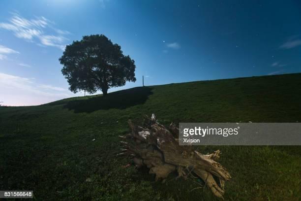 big tree in the grass field illuminated under moon light