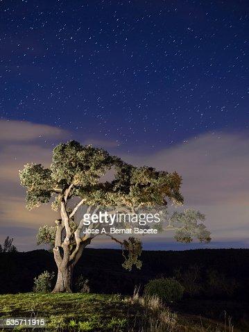 Big tree in the mountain a night of stars