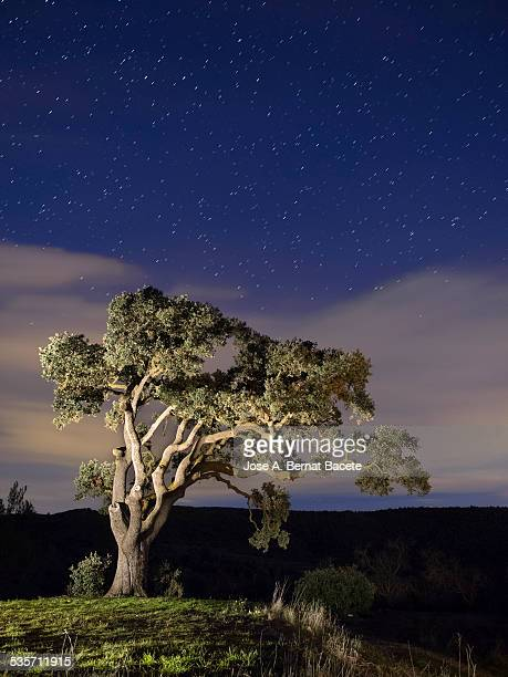 Big tree in the mountain a night of stars