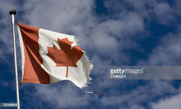 A weathered Canadian flag flutters in Big Valley north of Calgary Canada 11 June 2007 AFP PHOTO/David BOILY