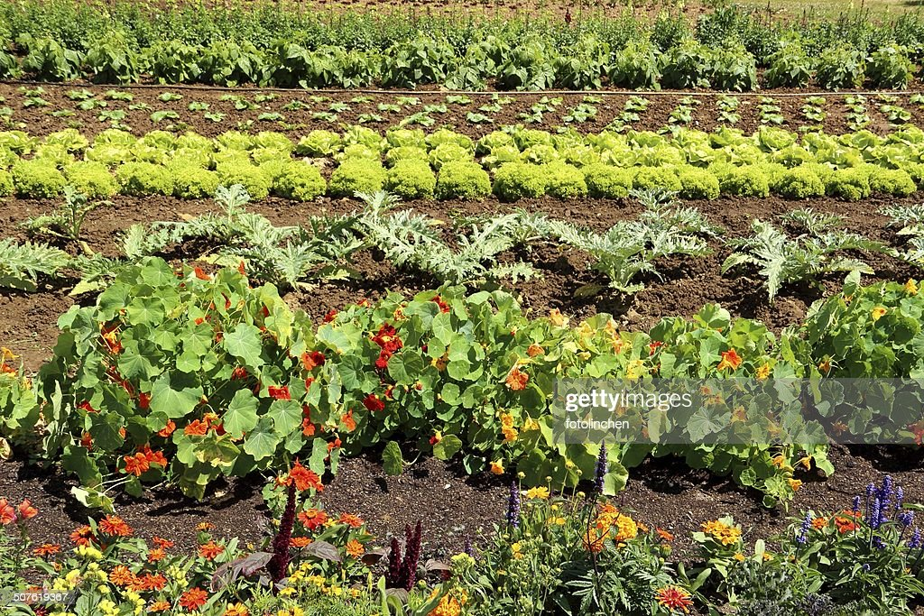 Big vegetable garden stock photo getty images for Large vegetable garden