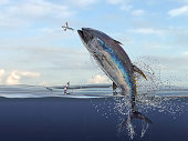 Big yellow fin tuna jumping to catch flying fishes haşf water view 3d Render