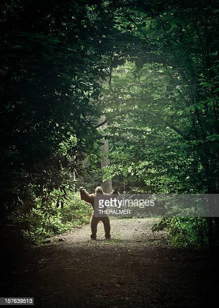 bigfoot fait une apparition dans une sale road
